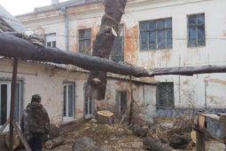 опиловка деревьев Волгоград