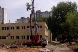 обрезка деревьев Волгоград